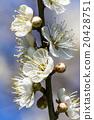 花朵 花卉 花 20428751