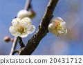 花朵 花卉 花 20431712