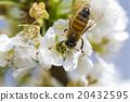 特寫 蜜蜂 昆蟲 20432595