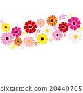 非洲菊 插圖 插畫 20440705