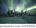 Aurora borealis (Northern Lights) in forest 20449095