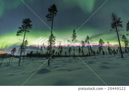Aurora borealis (Northern Lights) in forest 20449122