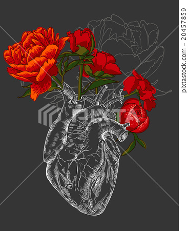 drawing Human heart with flowers  Stock Illustration 20457859