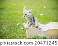 Cute tabby kitten taking a bath in 20471245