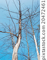 dry tree 20472461