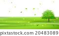 tree, wood, foliage 20483089