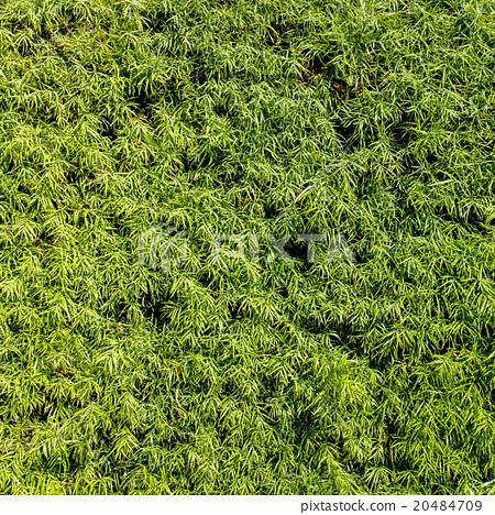 Green wall 20484709