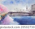 스미다의 벚꽃과 스카이 트리 20502730