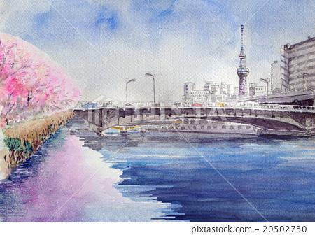 Sakura in the Sumidagawa river and sky tree 20502730