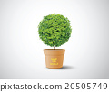 plant in the pot 20505749