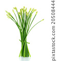 Chives flower or Chinese Chive isolated on white  20508444
