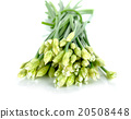Chives flower or Chinese Chive isolated on white 20508448