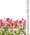 玫瑰 玫瑰花 形状 20512155