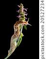 Slug sliding on flowers 20527234