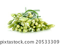 Chives flower or Chinese Chive isolated on white  20533309