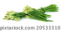 Chives flower or Chinese Chive isolated on white  20533310