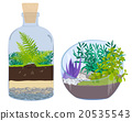 Plants in bottles. Terrariums with tree. 20535543