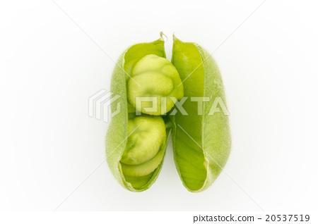 生鷹嘴豆:鷹嘴豆(鷹嘴豆) 20537519