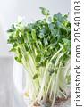 shellfish breaking, vegetable, vegetables 20540103
