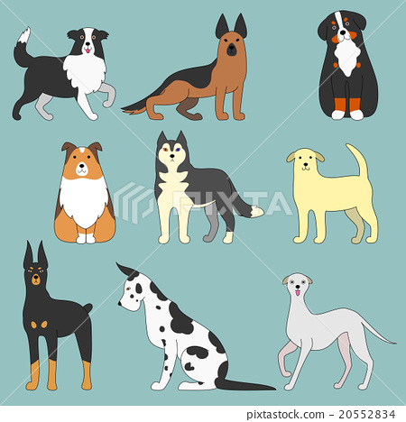 Various dogs 20552834