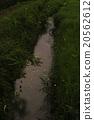 Genji firefly dancing in the stream 20562612
