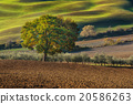 Tuscan fields and trees 20586263
