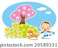 Shiba, shiba-inu, spring 20589331