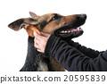 สุนัข,สุนัช,บุคคล 20595839