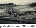 Tuscan fields and trees 20597469