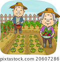 Senior Citizen Couple Harvest Garden 20607286