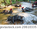Thai elephants taking a bath with mahout 20610335