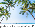 【Hawaii】 Oahu · Palm tree and blue sky 20619685