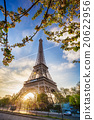 Eiffel Tower with spring tree in Paris, France 20622956