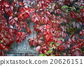 wall, red, decorative 20626151