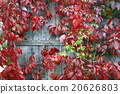 wall, red, decorative 20626803