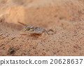 lizard geckos 20628637