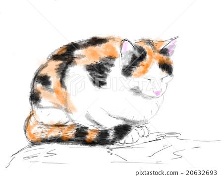Cat Illustration 20632693