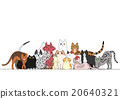 动物 美国短毛猫 阿比西尼亚人 20640321