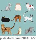 動物 美國短毛貓 阿比西尼亞人 20640322