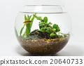 betta in fishbowl 20640733
