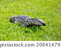 稀有動物 工園散步 冷血動物 20641479
