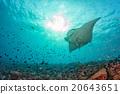 魟鱼 蓝色 背景 20643651