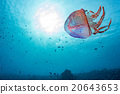 jellyfish back light underwater close up 20643653