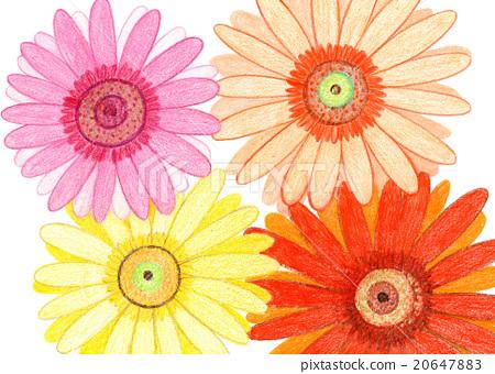 Handwritten cute gerbera flowers 20647883