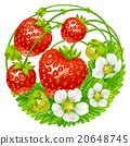 Vector strawberry round composition 20648745