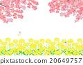 spring, rape, rape blossoms 20649757