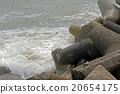 Coast 20654175