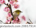 繡眼鳥 花朵 花 20657914