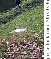 แมวนอนกับหญ้า 20659596