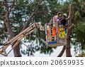 professional lumberjack cuts trunks 20659935